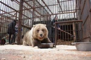 Петербургский центр помощи диким животным «Сирин» объявил, что больше не сможет принимать новых подопечных