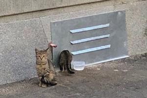 Много ли в Петербурге бездомных животных, как им помочь и стоит ли строить для них домики? Рассказывают зоозащитники