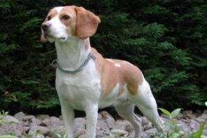 «Яндекс» запустил сервис для поиска потерявшихся домашних животных