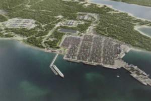 У Финского залива хотят построить портовый комплекс — ради него вырубили 260 га леса. Почему против проекта выступают зоозащитники и что говорят власти