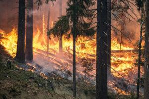 Почему в России постоянно горят леса, действительно ли их не всегда стоит тушить и как пожары в Сибири меняют климат? Рассказывает петербургский эколог