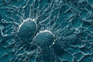 Что можно сделать для своего иммунитета, когда все вокруг болеют? Рассказывает биохимик