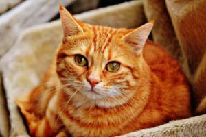Россельхознадзор создал сервис с информацией о перевозке кошек и собак. Там можно почитать о прививках и необходимых документах