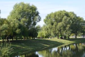 Смольный выделил новое место для храма, который планировали построить в парке «Малиновка».