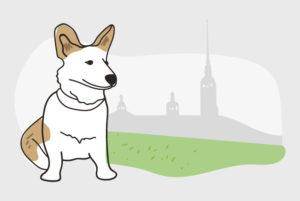Восемь лет назад петербуржцы создали закрытую группу «Петроградская диаспора» — сейчас в ней 4 тысячи человек. Как там договариваются о пикетах и ищут репетиторов и пропавшие двери