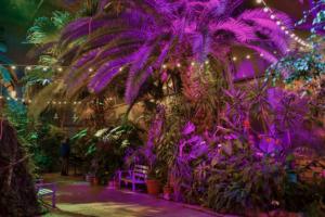 В оранжерее Таврического сада регулярно отключают отопление и растения спасают обогревателями. Но решить проблему не могут — за аварийную трубу никто не отвечает