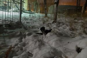 Жители Карелии жалуются на желтый туман и массовую гибель птиц после выброса с местного целлюлозно-бумажного комбината