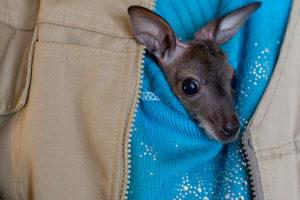 Крошечный кенгуренок, кот с вирусом иммунодефицита и мини-пиг Дуся — шесть текстов «Бумаги» о животных
