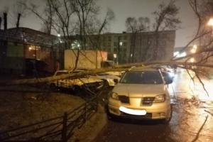 В Петербурге из-за сильного ветра упали деревья, светофоры, заборы и дорожные знаки