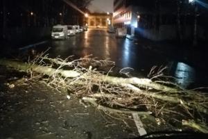 В ночь на 19 декабря в Петербурге был мощный шторм. Его последствия — в одном видео