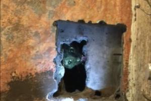 В Красносельском районе кошка Дуся застряла в вентиляционной шахте вниз головой. Ее спасали почти двое суток 🙀