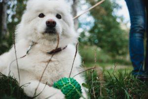 Как работают персональные закупщики продуктов, выгульщики собак и озеленители? Истории iGooods, «Гульдога» и Plants for friends