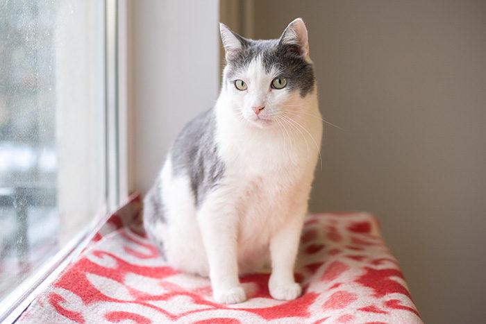 Петербургская семья уже два года заботится о коте с вирусом иммунодефицита. Каково жить с питомцем, который постоянно болеет
