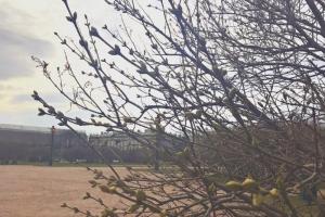 В парках и садах продолжают цвести вербы, анютины глазки и маргаритки. Посмотрите, как прекрасна петербургская весна в январе