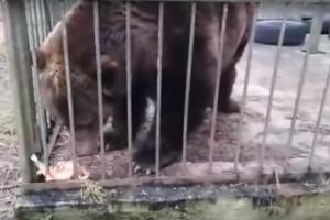 В центре «Велес» из-за теплой зимы проснулся медведь Потапка