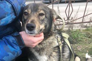Умерла бездомная собака, которую прозвали «петербургским Хатико». Как она ездила в электричках в поисках хозяина и чем ей помогали горожане