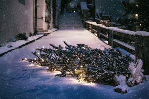 Куда сдать елку после Нового года в Петербурге? Смотрите пункты приема на карте