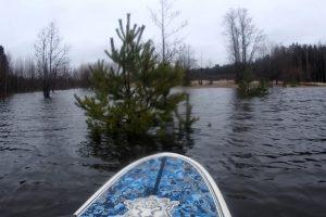 Серфер прокатился на сапе по затопленному лесу в Ленобласти 🌊