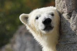 Ленинградский зоопарк показал снимки медведиц Услады и Хаарчааны, которые идеально подойдут для заставки на телефон