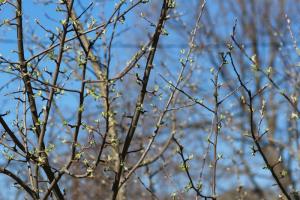 В нескольких частях России ожидают аномально теплый март. В Ленобласти будет на пять градусов выше нормы