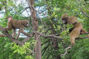 Вы знали, что в 2000-х на Елагином был «обезьяний остров»? Как в центре Петербурга проводили научный эксперимент с макаками и павианами