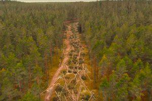 У Ладоги вырубили десятки деревьев — жители опасаются, что рядом построят коттеджи для осужденного бизнесмена. Вот как теперь выглядит местный лес
