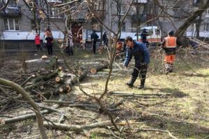 На проспекте Ветеранов вырубили молодые деревья. Местные жители пытались их защитить