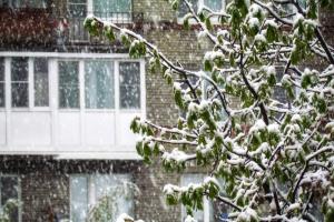 В Петербурге выпал снег — в середине мая ❄️. Посмотрите на заснеженные улицы и деревья