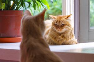Буйная нерпа, обитатель пышечной и морской котик, задержавший хулигана. Пройдите тест «Бумаги» о знаменитых петербургских животных