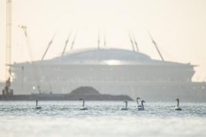 В Петербурге природа очистилась настолько, что на набережной Мойки умываются бобры. Можно встретить выдр и редких лебедей! 🦢