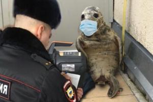 Петербургский тюлень попытался сбежать из центра реабилитации, но не вышло. Теперь с ним делают мемы — про карантин, Путина и бренность бытия