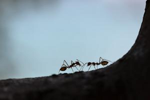 Чем для людей опасна изоляция и как эволюция делает нас похожими на муравьев? Рассказывает натуралист Евгения Тимонова