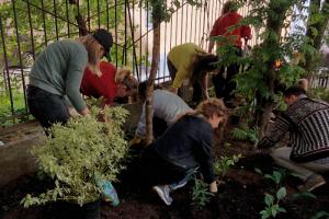 У фонда «Зеленый Петербург» появился сайт. Там можно сделать пожертвование на высадку деревьев в городе