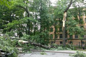 В Петербурге прошел ливень со штормовым ветром. Он повалил деревья и дорожные знаки, дороги затопило