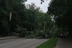 В Выборгском районе дерево упало на проезжую часть. Пострадали четыре человека