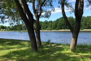 Парки, скверы и сады Петербурга откроются не раньше 2 июля. Их закрыли из-за штормового ветра