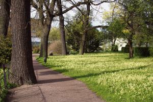 Со 2 июля в Ботаническом саду откроется парк-дендрарий. Там сейчас цветут поздние ирисы и травянистые пионы