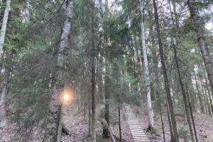 Шесть мест для лесной прогулки: лиственничная роща, экотропа с озерами и сосновая аллея на берегу реки