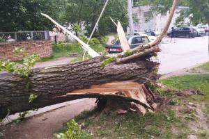 В Петербург пришел шторм «экс-Эдуард» — ветер валит деревья, срывает со зданий строительные леса и части фасадов. Парки закрыты