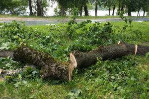 Во время шторма «экс-Эдуард» ветер повалил в Петербурге 75 деревьев. Среди них — два столетних дуба на Елагином острове