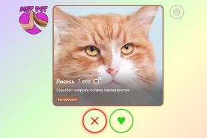 Кошек и собак из приютов Петербурга и Москвы можно забрать домой с помощью сервиса MetPet. Он работает по принципу Tinder