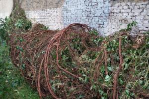 Жители Петроградского района намерены вернуть виноград, сорванный ветром с дома на Лизы Чайкиной. Вот как они это сделают