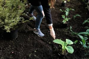 Петербургские активисты озеленят сквер на улице Марата. Принять участие в высадке растений сможет любой желающий