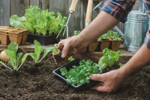 В Приморском парке Победы открыли общественный огород. Первый урожай хотят собрать в сентябре