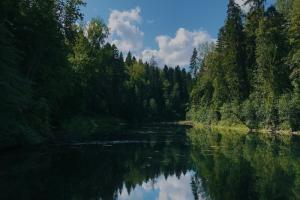Это паблик с экотропами Ленобласти: от Сестрорецких болот до Колтушских высот