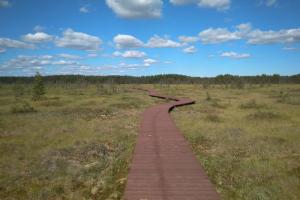 Экотропу в «Сестрорецком болоте» продлили. Теперь протяженность маршрута — 3,5 километра