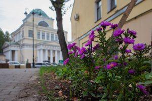 Кто и как борется за сохранение деревьев в Петербурге и почему в городе так мало зелени