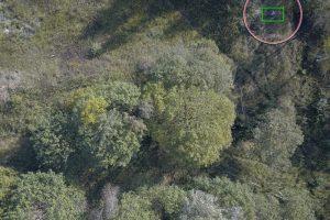 Поисковый отряд «Лиза Алерт» нашел человека, пропавшего в брянском лесу, с помощью нейросети