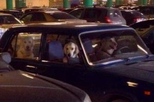 Петербуржец почти два года ведет инстаграм Waiting dogs — он показывает собак, которые ждут хозяев у магазинов и в машинах