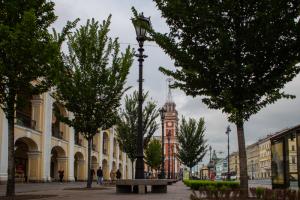В этом году в Петербурге посадили на 21 % меньше деревьев, чем планировали. Это произошло из-за сокращения бюджета